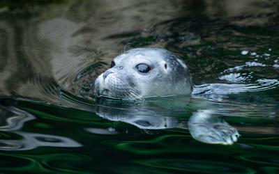 Foka zoo wrocław